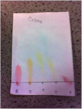 candy chromatography lab report